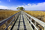 Tundra Swan Boardwalk, Eastern Neck National Wildlife Refuge, Maryland