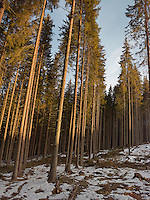 FOREST_LOCATION_90035