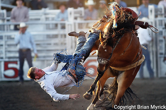 "Tyrell Aztel is thrown from his bronc ""Fireball"" during the Daily Record Bares and Broncs Futurity at the Ellensburg Arena, Saturday, May 12, 2012."