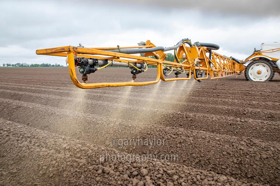 Spraying residual herbicide following rain onto potato ridges (part boom section spraying)  - Licolnshire, April
