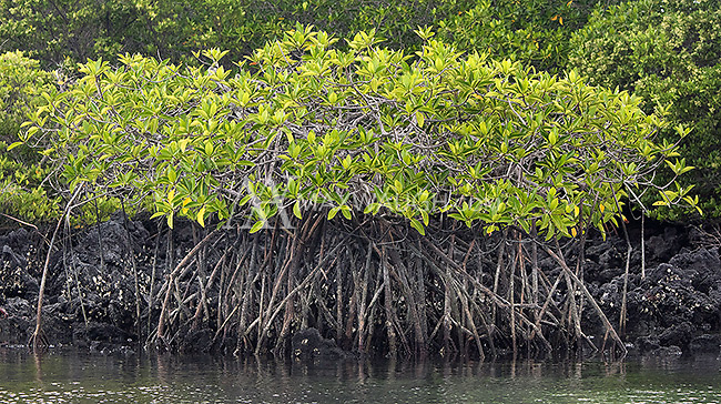 Mangroves grow in an island lagoon.
