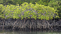 Mangroves grow in an island lagoon.