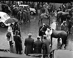 Puck Fair in the 1950's..Picture by Harry MacMonagle