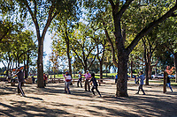 Under the tall trees, in their shadows, a group practices exercises, tai chi under the trees.