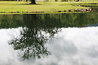 Stock photo: Reflection of a tree in the lake near a grassland.