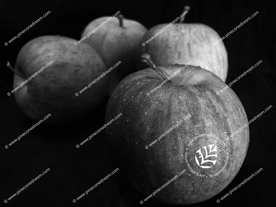 Black and white fine art photograph of apples with dark background.<br />