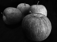 """Black and white fine art photograph of apples with dark background.<br /> <br /> To view the same image in color visit the gallery-""""Food & Other Still Life""""."""