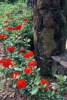 Red zinnias next to stone pillar
