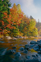 Red maples &amp; eastern white pines<br />