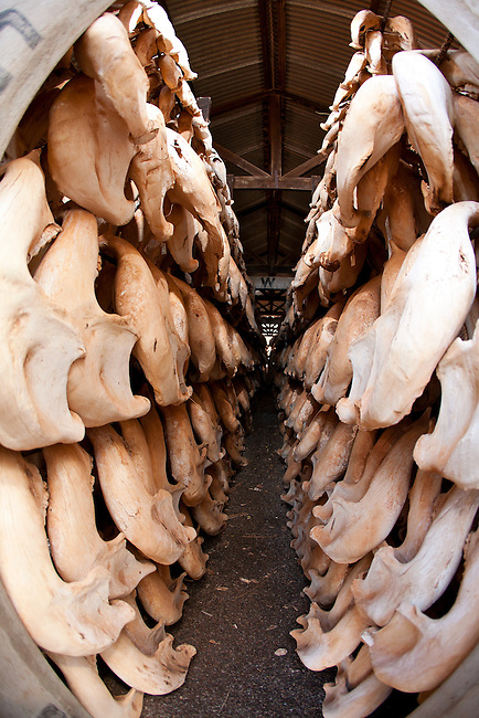 .Storage for Elephant jaws and rhino skulls.