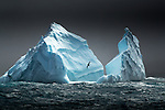 South Georgia Island, Bird Island region , albatross and icebergs <br />