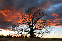 A rainbow crosses the sky over the second largest white oak tree January 14, 2014 in Earlysville, VA. Photo/Andrew Shurtleff