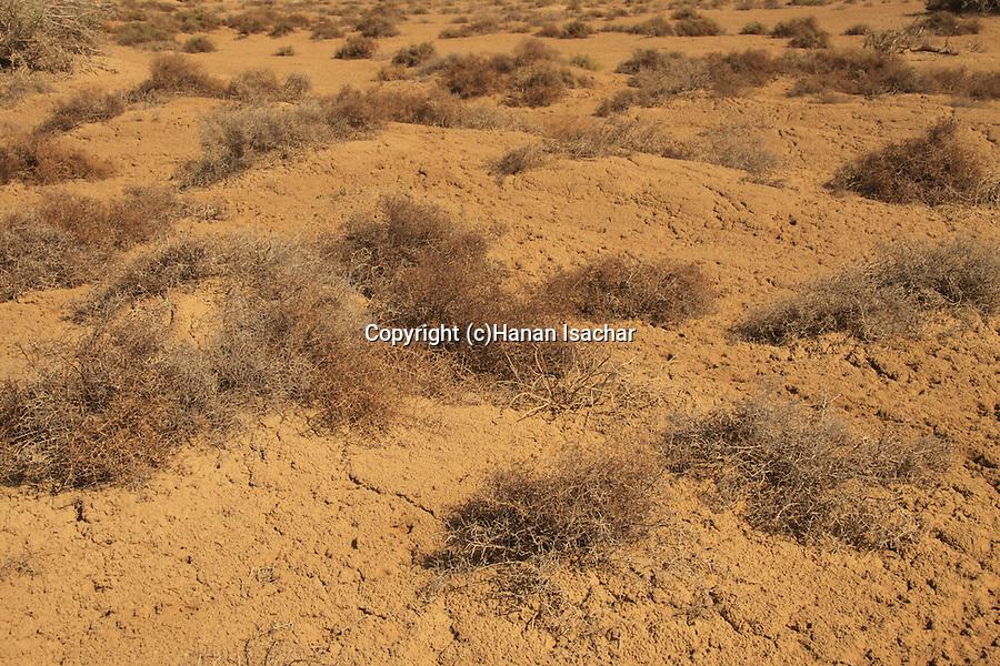 Israel, Evrona salt pan in the Arava