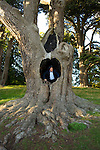 Scotsman in a tree: Eddie Galacher in the grounds of Blenheim Palace during the Woodstock Literary Festival, Woodstock, Oxfordshire, UK. 16 September 2010. Photograph copyright Graham Harrison.
