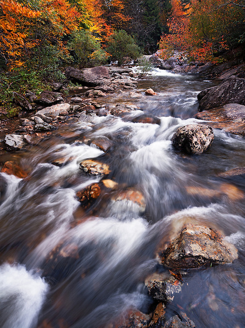 Autumn along West Fork Pigeon River, Pisgah National Forest
