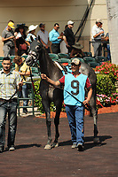 HALLANDALE BEACH, FL - APRIL 01: Taperge in the walking paddock for the Sanibel Island Stakes on Florida Derby Day at Gulfstream Park on April 01, 2017 in Hallandale Beach, Florida. (Photo by Carson Dennis/Eclipse Sportswire/Getty Images)