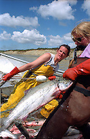 Corrie Morrison (left) and Lisa Krebs, pull in a sockeye salmon on Krebs' setnet site on Egegik River in Bristol Bay, Alaska in June 1996.  Bristol Bay is home to the world's largest sockeye salmon fishery.  The rivers also get a fair amount of chum, king, and chinook salmon.  Bristol Bay is located in the southwest part of Alaska. (© Karen Ducey Photography)