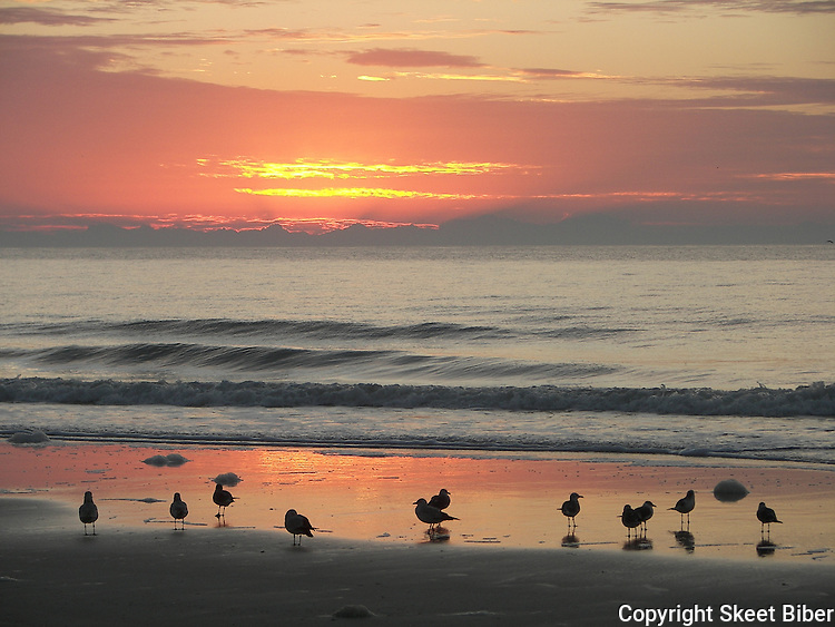 Sunrise glory with birds on beach