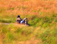 Fly fisherman resting with grass blowing in wind. Minto Flats, Alaska