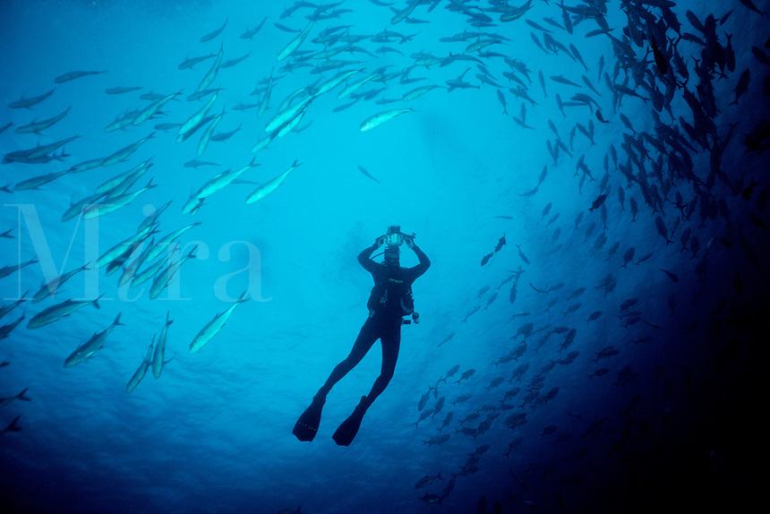 Bigeye jack, Caranx sexfasciatus, with diver, Cocos Island, Pacific Ocean