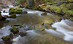 Idaho, North, Coeur d'Alene. Beauty Creek in spring in the Idaho Panhandle National Forest.