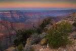 Morning light over pinyon pine tree and cliffs along the North Rim at Point Sublime, Grand Canyon National Park, Arizona