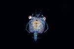 Crustaceans Black Water