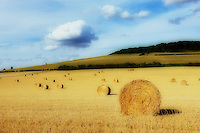 Handsome round hay bales recently harvested dot the rolling hills of the Burgundy countryside of France in late summer.