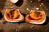 MEXICO, Baja, Magdalena Bay, Pacific Ocean, the inside of a Shellfish