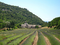"""The iconic Sénanque Abbey with lavender fields in bloom. """"Abbaye Notre-Dame de Sénanque"""" is a Cistercian abbey built in 1148, and located near the village of Gordes in Provence."""