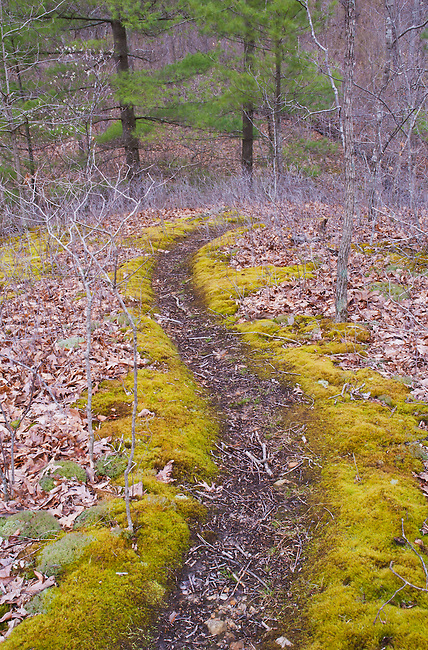 Moss grows along a path in spring at Fall Creek Gorge Nature Preserve in Warren County, Indiana