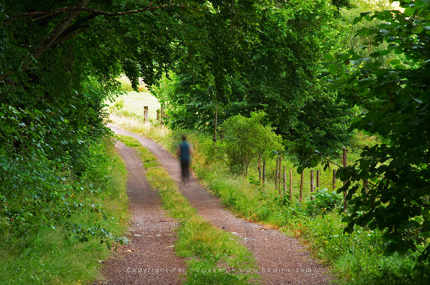 Country road. A person walking on the road. Through the forest. Smaland region. Sweden, Europe.