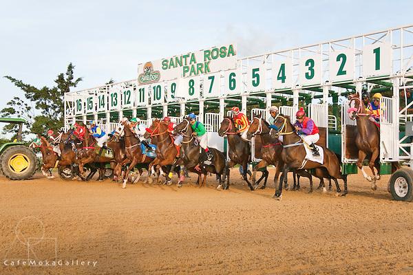 Horse Racing, Santa Rosa Park, Arima,the starting gate