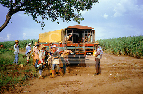 Sao Paulo State, Brazil. Sugar cane workers arriving by truck in the fields, wearing protective clothing.