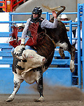 Souli Shanklin scores an 83 point ride on Beutler & Son Rodeo Company bull 469 to tie in the round with Mike Moore on July 29th at the Greeley Independence Stampede Rodeo in Greeley, Colorado.
