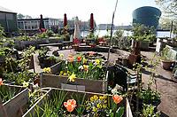 Nederland Amsterdam april 2019 . Shaffy's Tuin aan het Oosterdok. De Tuin is geïnspireerd op de vrijgevochten zanger Ramses Shaffy die in de jaren zeventig op een boot op de Dijksgracht woonde. Het is een bloemen/groentetuin voor de buurtbewoners. Foto Berlinda van Dam / Hollandse Hoogte