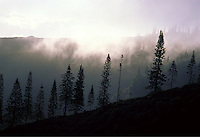 Historic Munro Trail with Cook Pine trees and mist near Lanai City