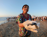 Kemp's ridley sea turtle (Lepidochelys kempii), volunteers showing baby turtles to public during release, South Padre Island, South Texas, USA