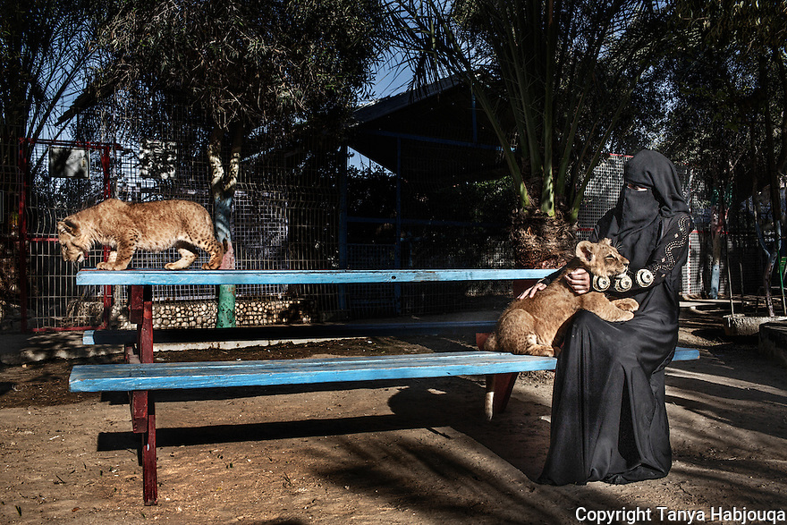 Gaza: A woman plays with two baby lion cubs born in the Rafah Zoo.  Gaza once had six zoos, but two were closed due to financial losses and the deaths of large animals. Gazan zoo keepers are renowned for creativity in limited options, having famously painted a donkey as a zebra, smuggling in animals in the tunnels, and stuffing them once they are dead as animals are not easy to replace. 2013