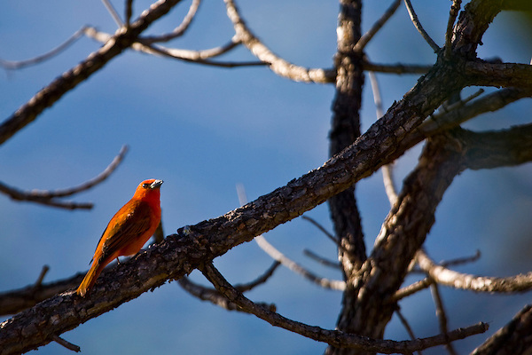 Nova Lima_MG, Brasil...Condominio Passargada. Na foto um passaro...The Passargada condominium. In this photo a bird...Foto: JOAO MARCOS ROSA / NITRO