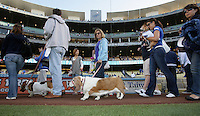 Dogs with their owner's walk around the warning track on Bark At The Park Night before the game between the Los Angeles Dodgers and the Houston Astros at Dodger Stadium on May 26, 2012 in Los Angeles,California. Los Angeles defeated Houston 6-3.(Larry Goren/Four Seam Images)