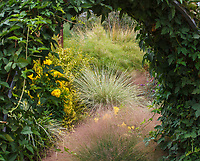 View through arch with thornless blackberries into Sunset gardens, Cornerstone, Sonoma wiht Lomandra 'Platinum Beauty'