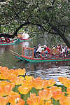 Swan boats and flowers in the Boston Public Garden, MA