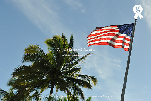 Floating US flag by palm tree (Licence this image exclusively with Getty: http://www.gettyimages.com/detail/83749926 )