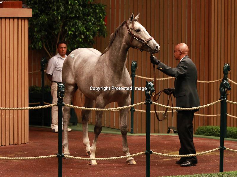 13 September 2011.Hip #260 Tapit - Runway Rosie colt sold for $200,000.