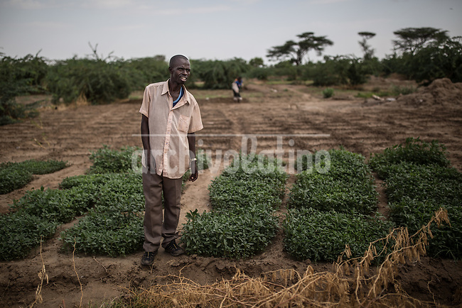 A small vegetable garden of  Kakum, Kenya.Kakuma refugee camp in North of Kenya. Kakuma is the site of a UNHCR refugee camp, established in 1991. The population of Kakuma town was 60,000 in 2014, having grown from around 8,000 in 1990. In 1991, the camp was established to host the 12,000 unaccompanied minors who had fled the war in Sudan and came walking from camps in Ethiopia.