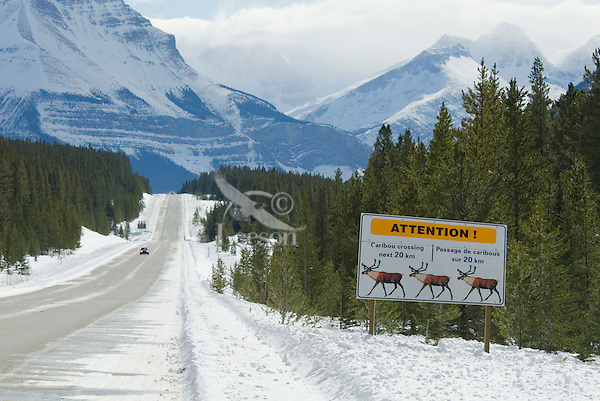 Sign warning of mountain caribou or woodland caribou road crossing.