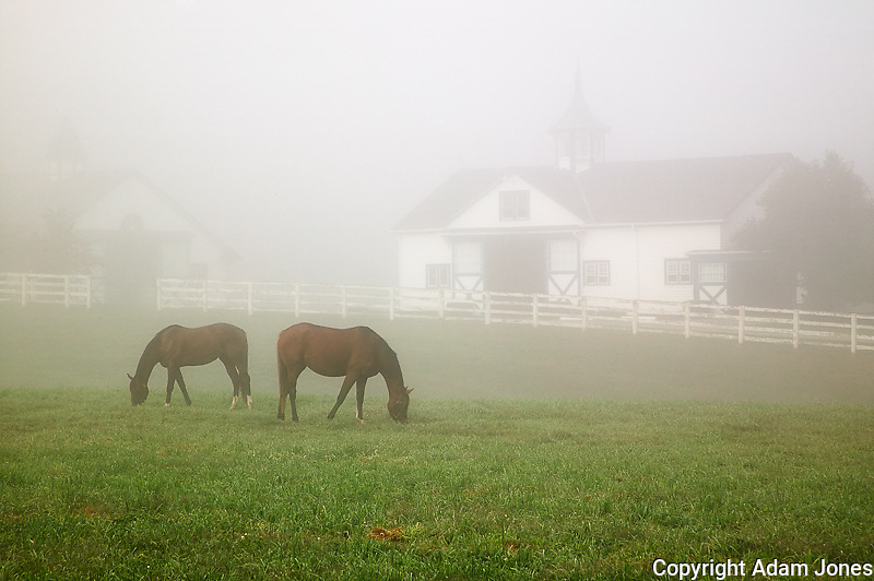 Manchester Horse farm on foggy morning, Lexington, Kentucky