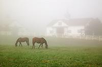 Manchester Horse farm on foggy morning, Lexington, Kentucky