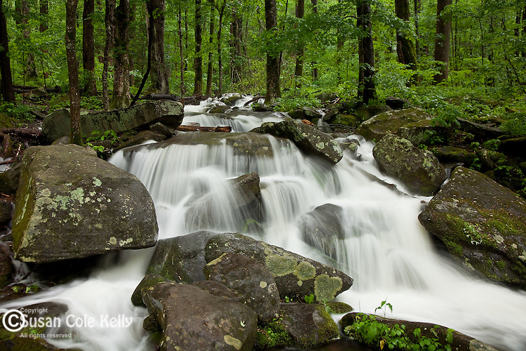 Waterfall after spring rain, Great Smoky Mountains National Park, TN, USA